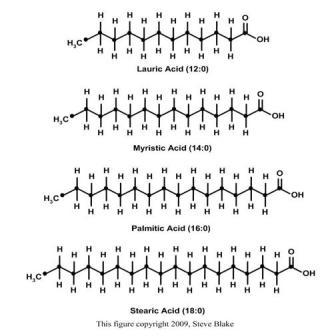 Acidos grasos de cadena larga