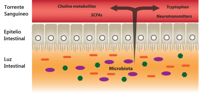Absorción de metabolitos bacterianos