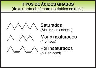 Tipos de ácidos grasos por saturación