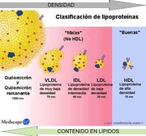 Tipos de lipoproteinas
