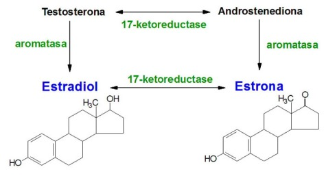 Aromatización