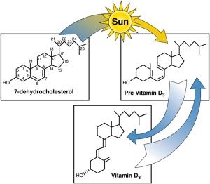 El colesterol por efecto del sol en la piel se convierte en previtamina D y después en vitamina D