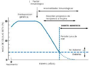 Historia natural de la diabetes mellitus tipo 1, desde el inicio del factor inmunológico hasta la pérdida de la función de las células beta.