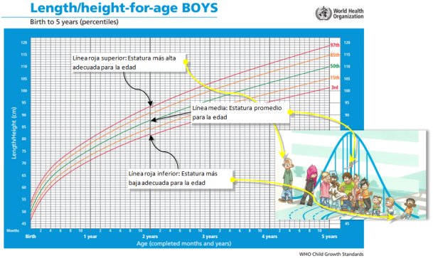 Las curvas de crecimiento comparan el crecimiento de un niño o una niña con un grupo de referencia de su edad