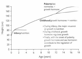 Durante los dos primeros años de vida, la nutrición es la influencia principal en el crecimiento. A partir de entonces y el resto de la niñez, el aumento de talla es regulado principalmente por la hormona de crecimiento. Y finalmente, con la aparición de la pubertad, la hormona de crecimiento y las hormonas sexuales contribuyen a la regulación del crecimiento.
