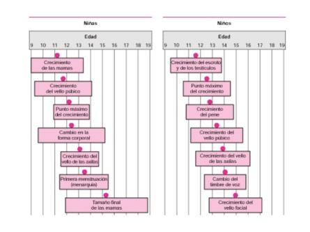Rangos de edad aproximados en los que presentan los cambios puberales